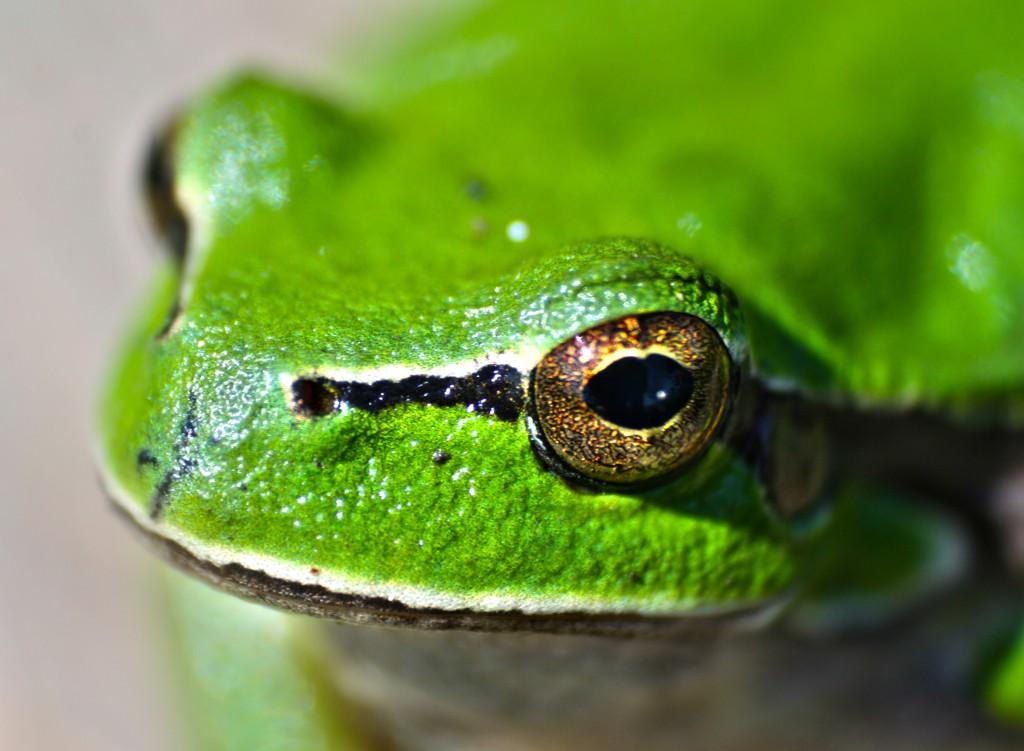 biology_Frog